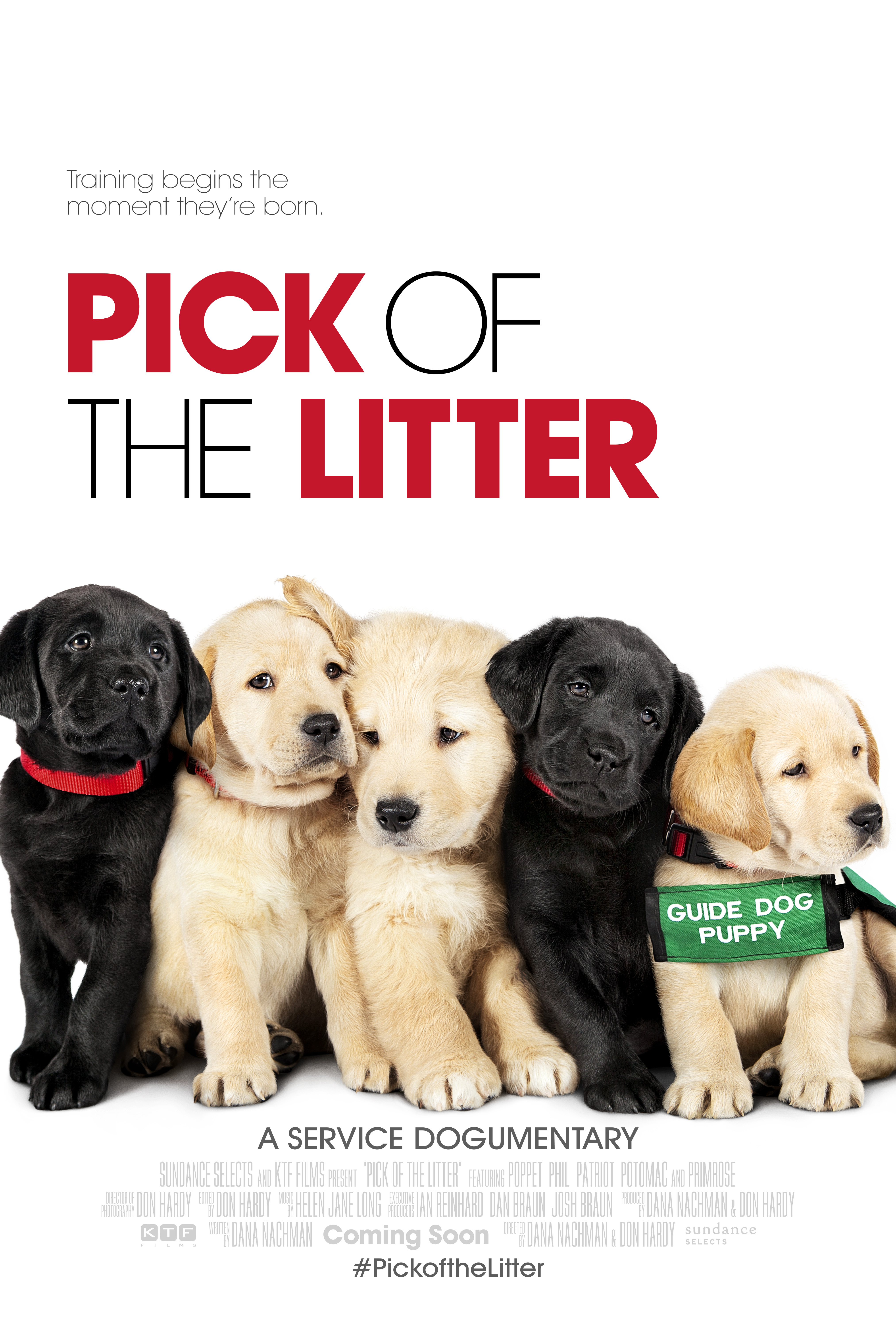 Pick Of The Litter – Feature Documentary